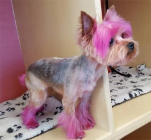 pet-custom-hair-styles-nj