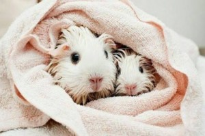 pet-grooming-hamsters-nj