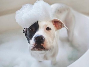 pet-grooming-nj-dog