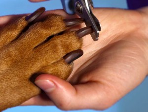 pet-groomers-nj-nail-clipping